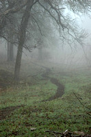 Cowpath in Fog